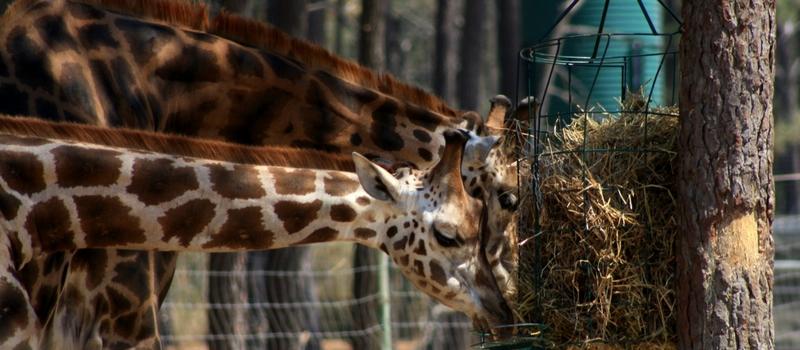 Onde levar as crianças a conhecer animais selvagens?
