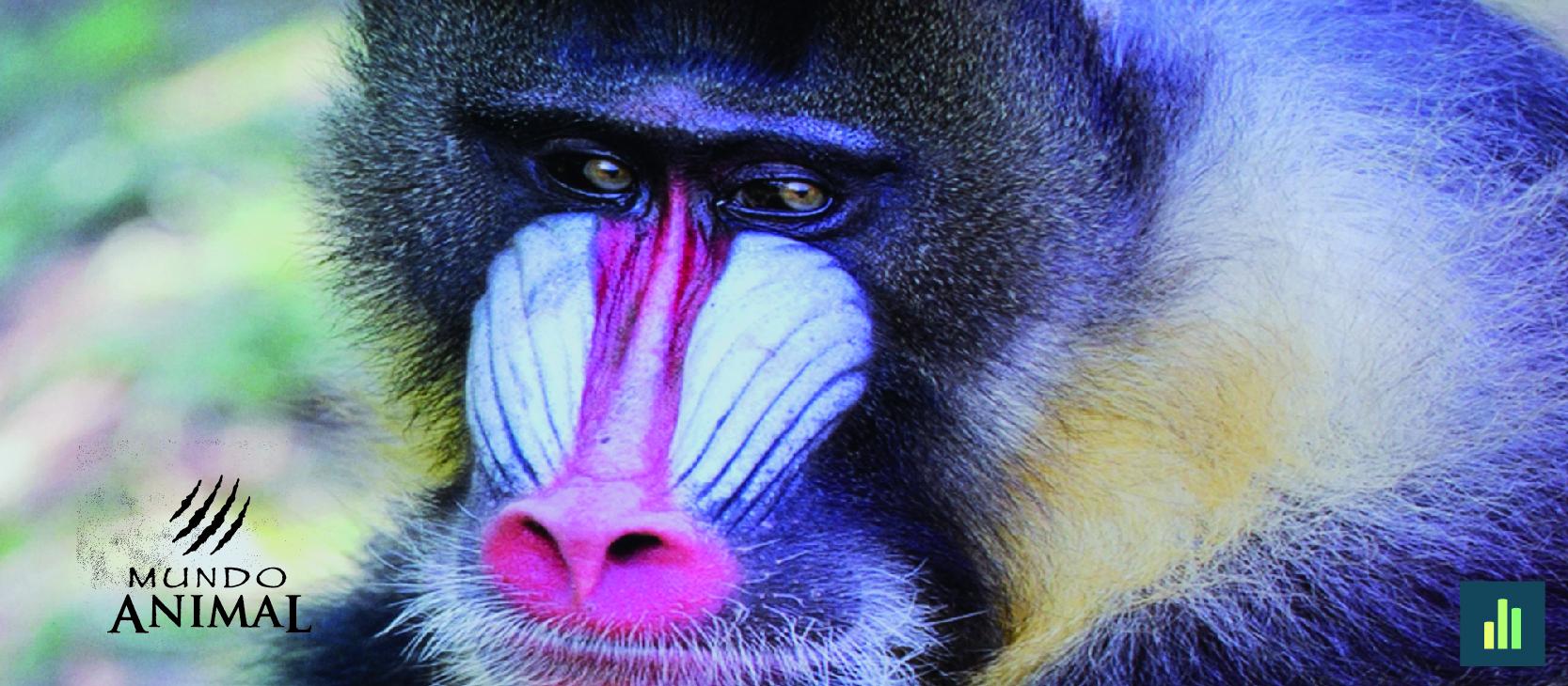 Mamíferos: os mais evoluídos de todos os animais