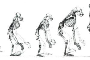 De há 10 milhões de anos para cá
