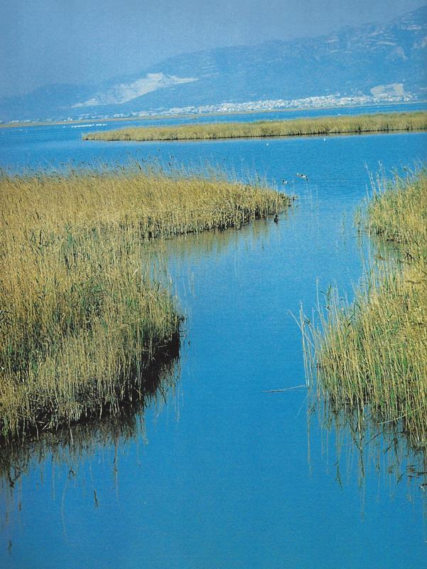 Comunidade internacional celebra a Água