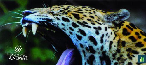 O Mundo Animal está (também) em perigo
