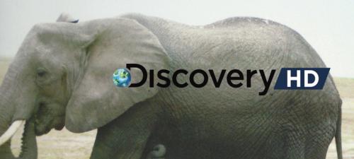 """O selo de qualidade Discovery Channel nos DVDs de """"Mundo Animal"""""""