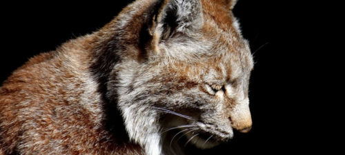 Uma missão de todos: proteger as espécies animais