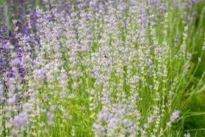 5 Remédios Naturais para toda a Família